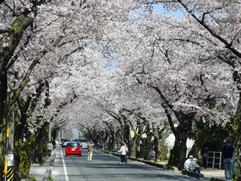 $レッド イット ビー-豊田高専 桜街道